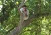 Pedrinho, no alto da amendoeira!