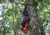 Ecoparque de Una, Bahia -2007